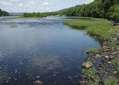 Delaware River Freshwater Mussel and Aquatic Habitat Survey for Port Jervis